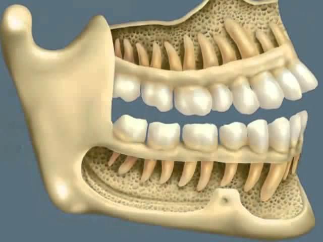 Строение челюстей