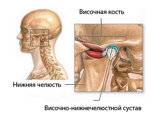 Схема человеческой нижней челюсти: височная кость и височно-нижнечелюстной сустав