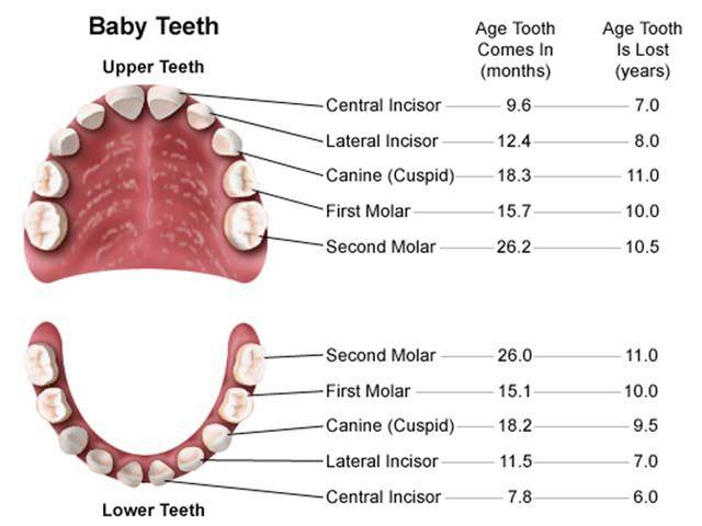 Как появляются зубы у грудничка